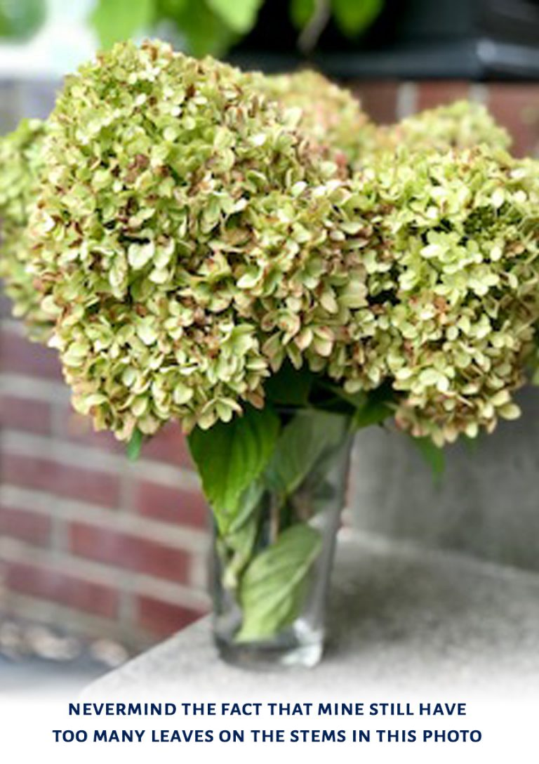 dry hydrangea blooms easy home decor DIY