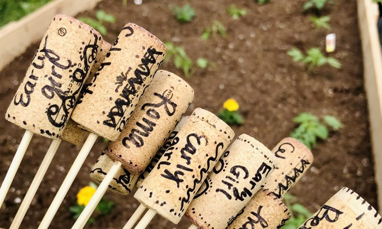 Garden Plant Marker Labels with Wine Corks