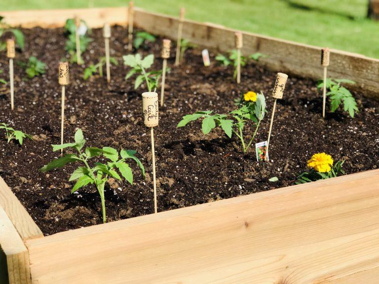 raised garden bed with cork garden markers